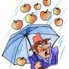 Яблоки с неба и другие новости