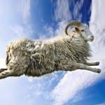 Следы летающего козла