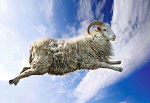 Летающий козел
