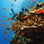 Великая подводная стена