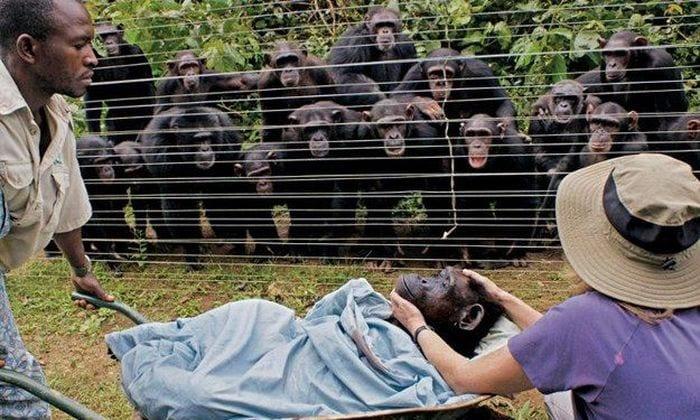 Шимпанзе Дороти и её друзья