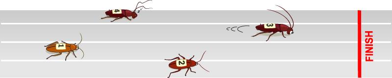 Тараканьи бега