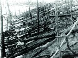 лес Тунгуски