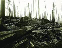 Вырубка леса в округе Гумбольдт. США