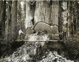 вырубка леса округ Гумбольдт  США (9)