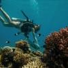 Шедевры с морского дна