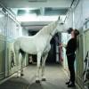 К коням – с любовью
