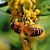 Как спасти пчёл от исчезновения