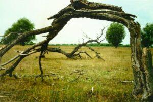 """Изогнутое дерево в """"темнилище"""""""