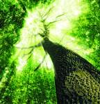 <b>А лес стоит загадочный</b>